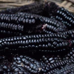 Maiz morado seco – Maïs violet séché