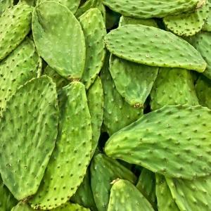 Nopales Enteros Salmuera – Cactus Entiers en Saumure